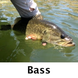 Fly-Fishing-Bass-San-Diego