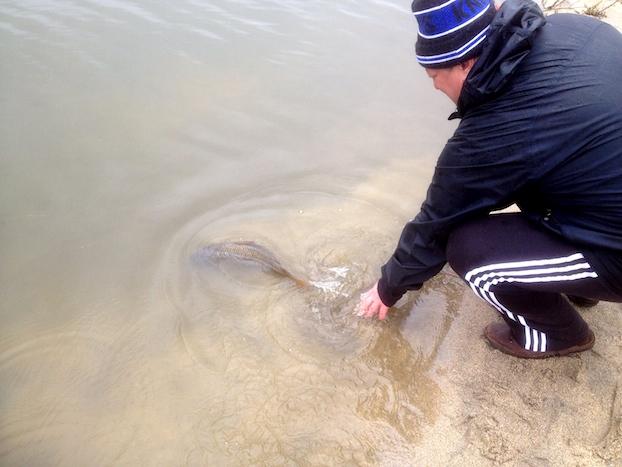 Carp-Release-Fishing