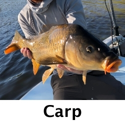 Carp-Fly-Fishing-san-Diego