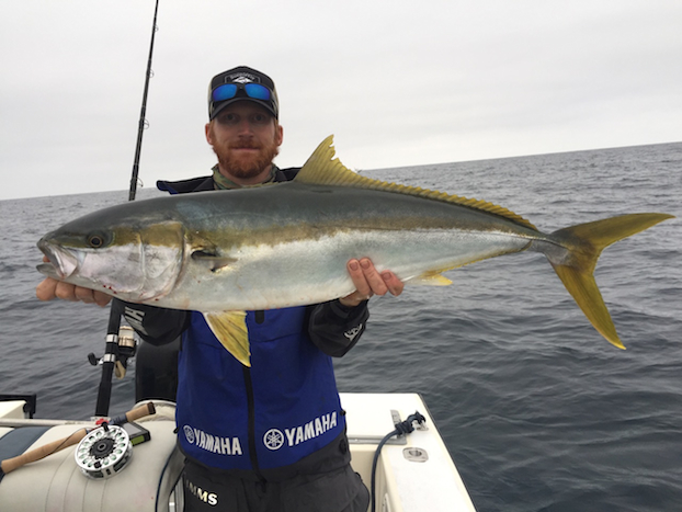 Yellowtail-Fly-Fishing-San-Diego