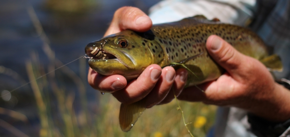 Best Trout Flies for Sale - TheFlyStop com Fly Shop