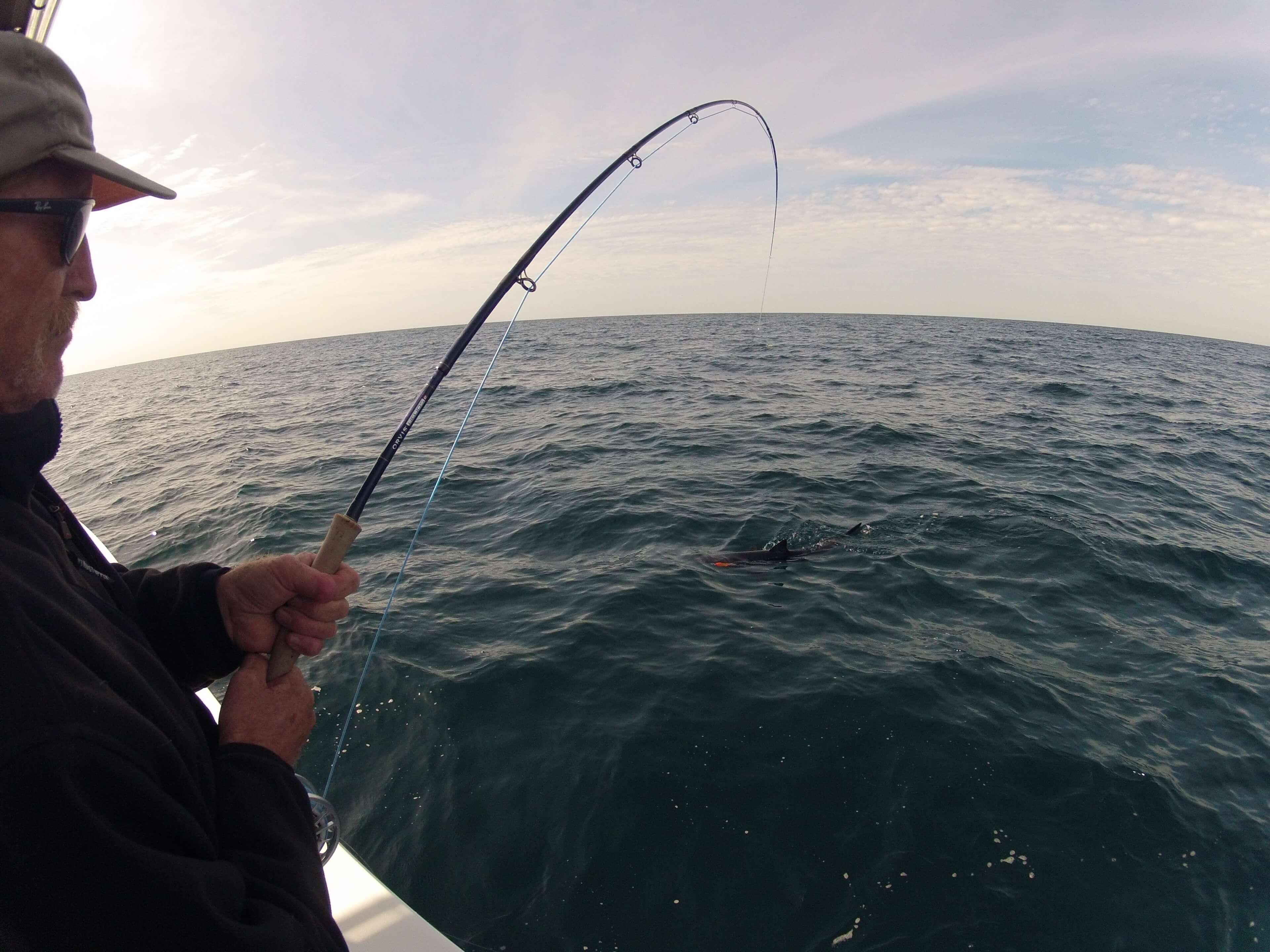 Mako-Shark-Fly-Fishing-San-Diego