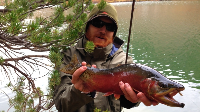 Golden-Trout-California-Fly-Fishing