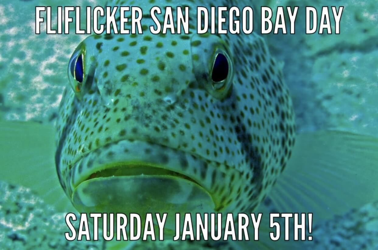 FliFlicker SD Bay Day