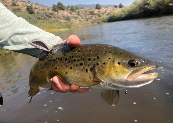 East Walker River Fly Fishing