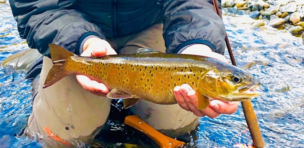 "Biggest-fish-of-the-trip-16""-Trout"