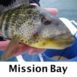 Mission-Bay-Fly-Fishing