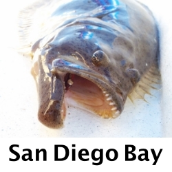 San-Diego-Bay-Fly-Fishing