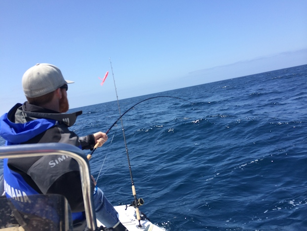 Shark-Fly-Fishing-1