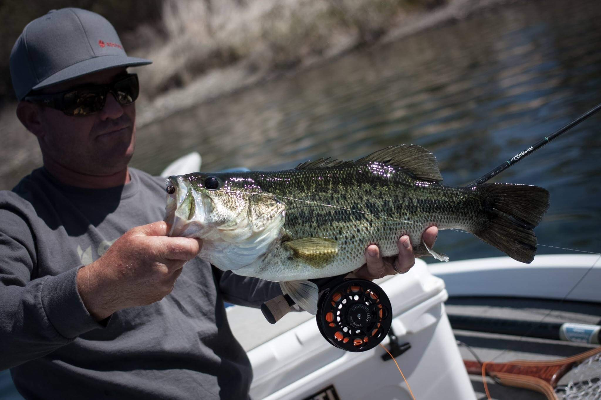 Largemouth bass-bass on the fly-pre-spawn-flyfishing SD