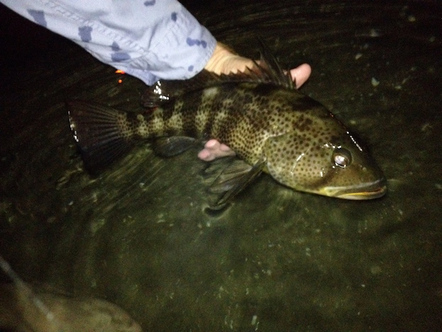 Mission_Bay_Spotted_Bay_Bass