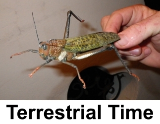 Terrestrial-Dry-Flies-for-Trout