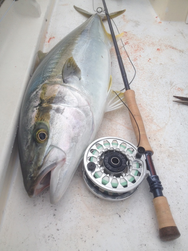 Yellowtail-Fly-Fishing-Aspen-Reels