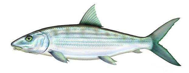 bonefish-flies