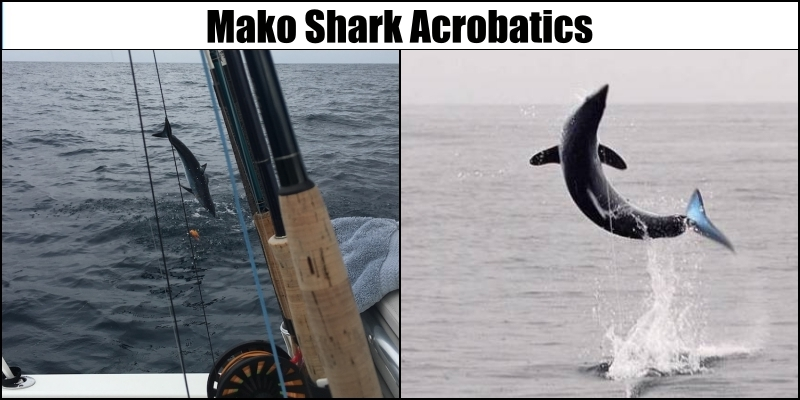 Mako-Shark-Fly-Fishing-Jump