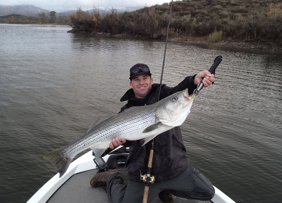 Stripped Bass San Diego Fishing Guide